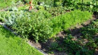 allotment-1059_800